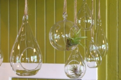 Glass Teardrop and Globe Hanging Terrariums